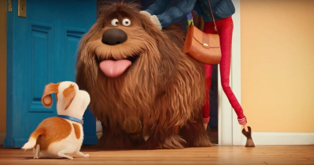 Dog From Pets Secret Life Who Looks Like A Cat