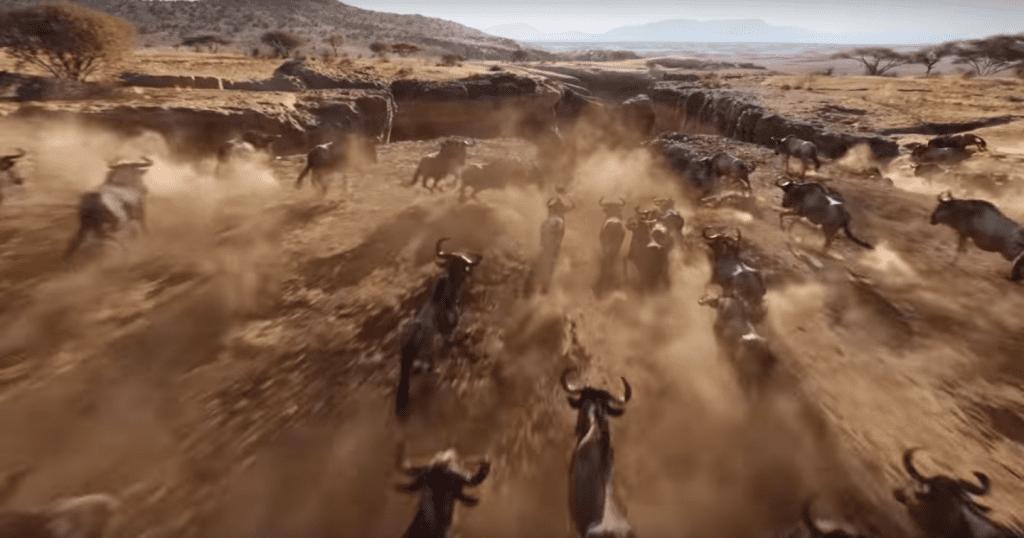 Lion-King-Remake-Wildebeest